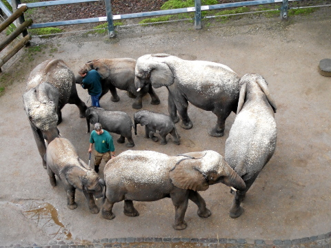 elefanten-von-oben-005.jpg