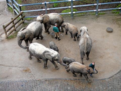 elefanten-von-oben-008.jpg